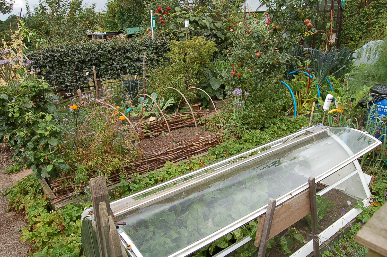 Permaculture garden greenbenchramblings for Permaculture garden designs