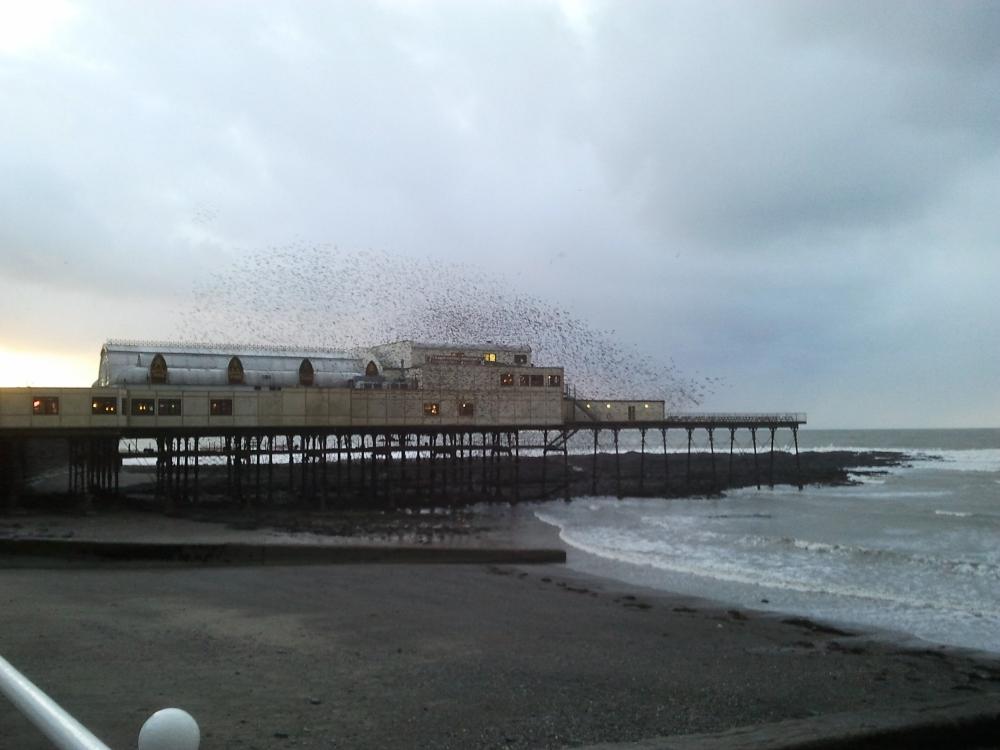 The Wonderful Starlings of Aberystwyth (3/4)
