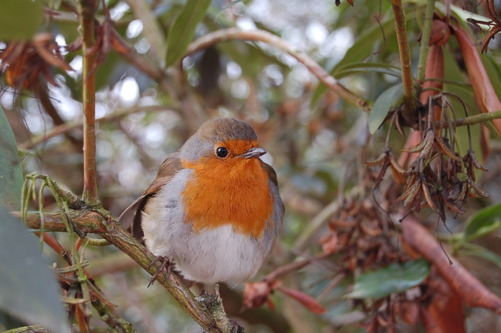 Our Wildlife Friendly Allotment - Gardening for Wildlife Gardening with Wildlife (1/6)