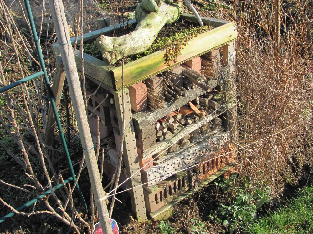 Our Wildlife Friendly Allotment - Gardening for Wildlife Gardening with Wildlife (5/6)