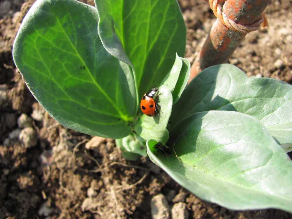Our Wildlife Friendly Allotment - Gardening for Wildlife Gardening with Wildlife (2/6)