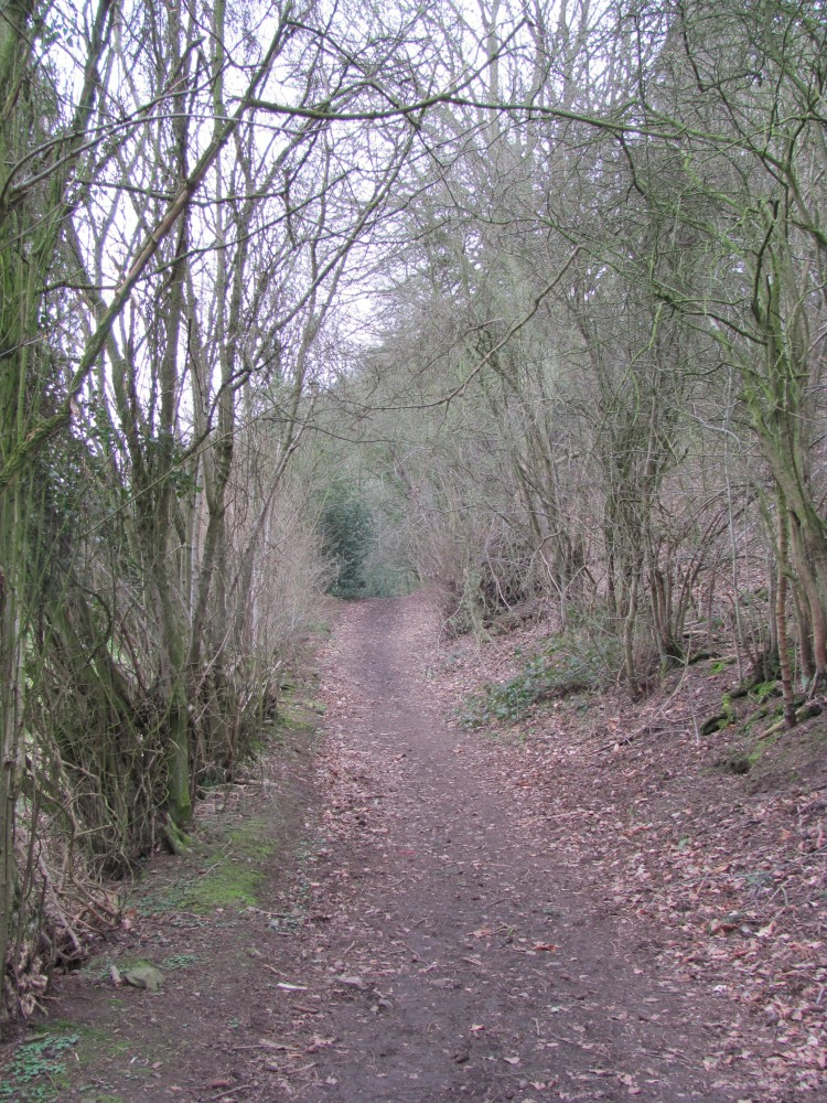 A Wander Around a Hill - Earls Hill Nature Reserve (2/6)