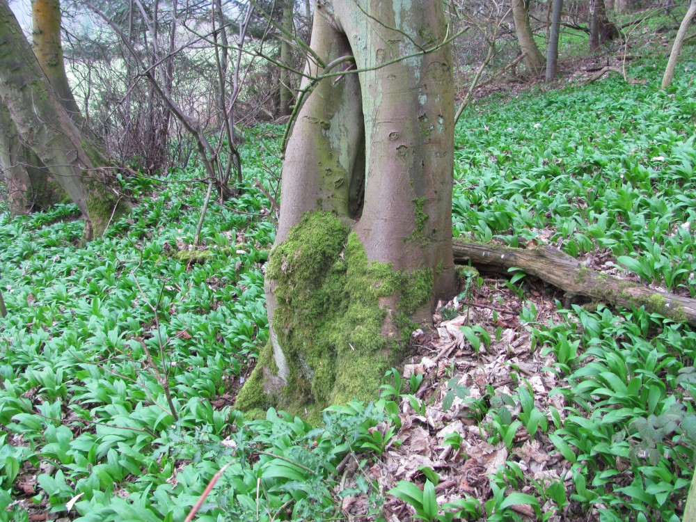 A Wander Around a Hill - Earls Hill Nature Reserve (4/6)