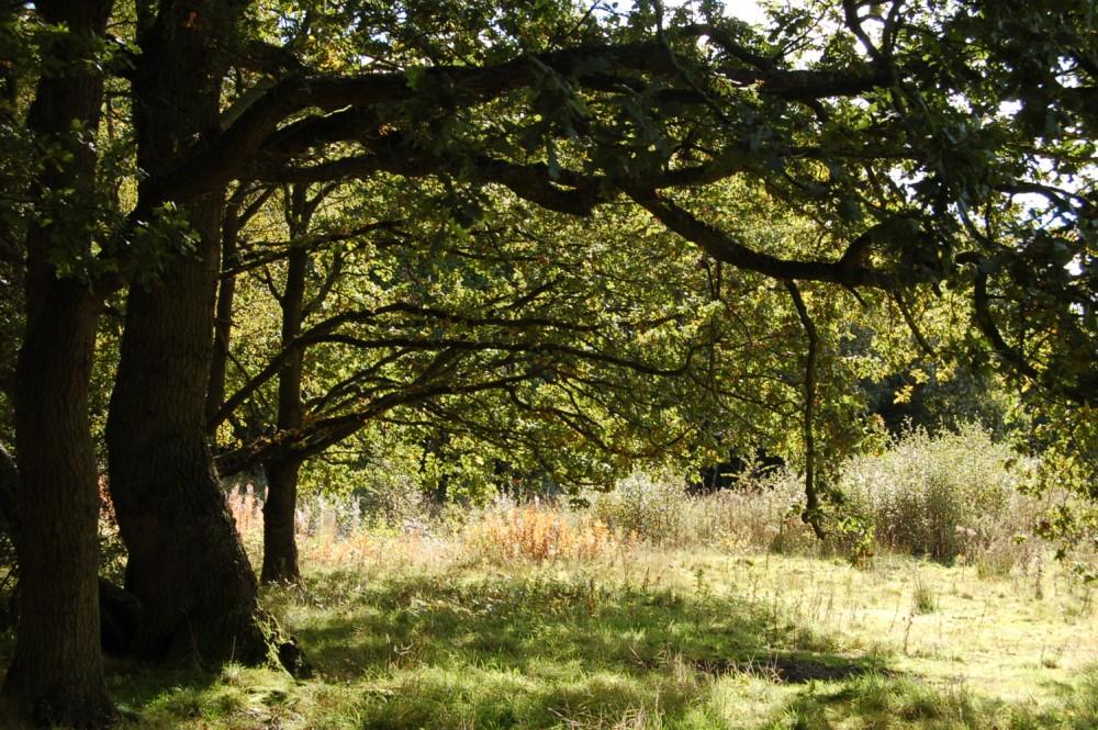 Brown Moss - a Shropshire Wildlife Gem (1/6)