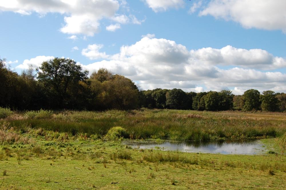 Brown Moss - a Shropshire Wildlife Gem (2/6)