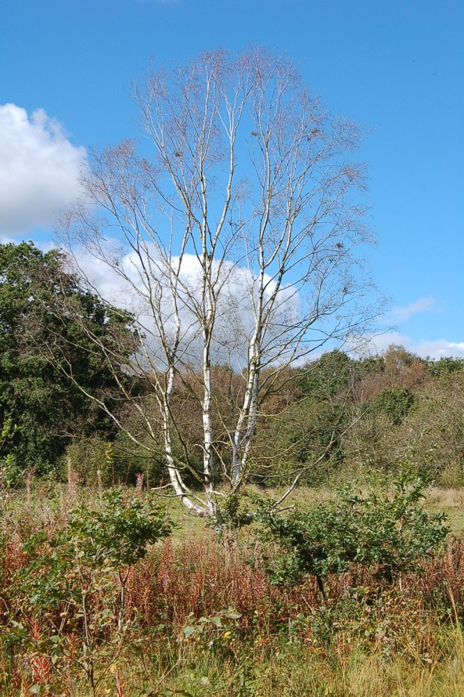 Brown Moss - a Shropshire Wildlife Gem (3/6)