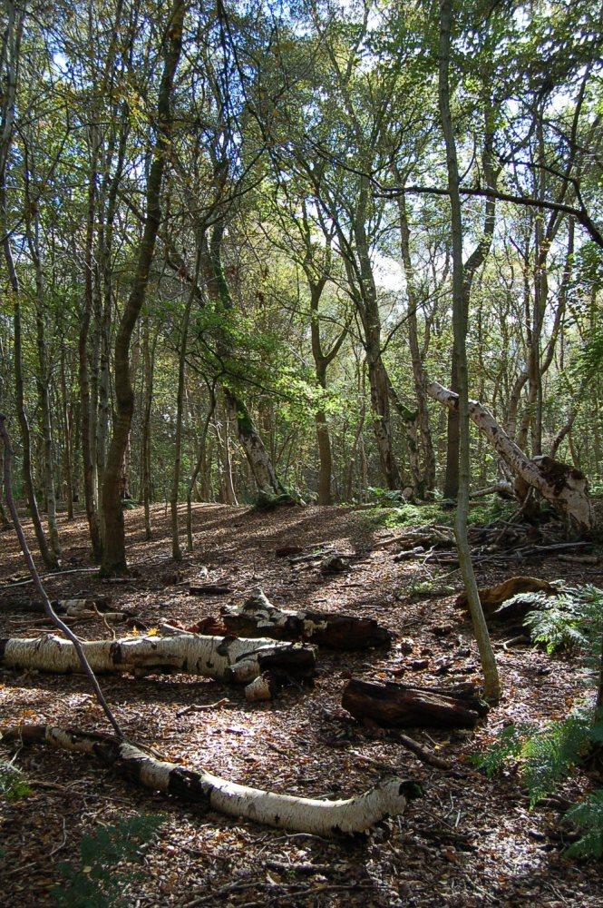 Brown Moss - a Shropshire Wildlife Gem (5/6)