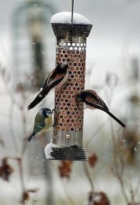 garden birds 10
