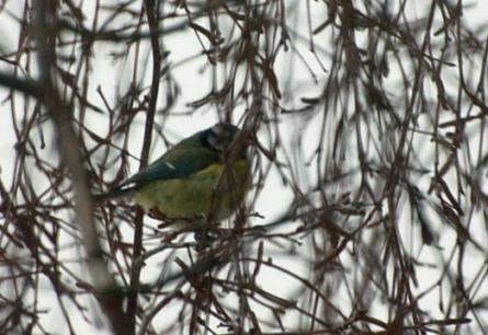 garden birds 3