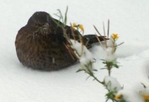 garden birds 4