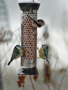 garden birds 7