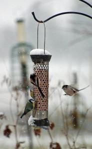 garden birds 9