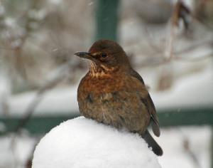 january birds 1