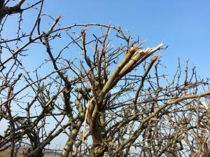 hedge 4