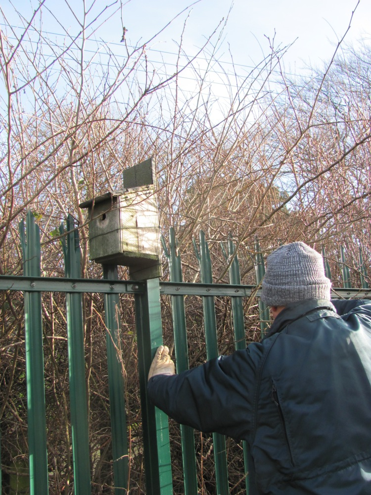 A Morning at the Allotments - Checking the Bird Boxes (1/6)