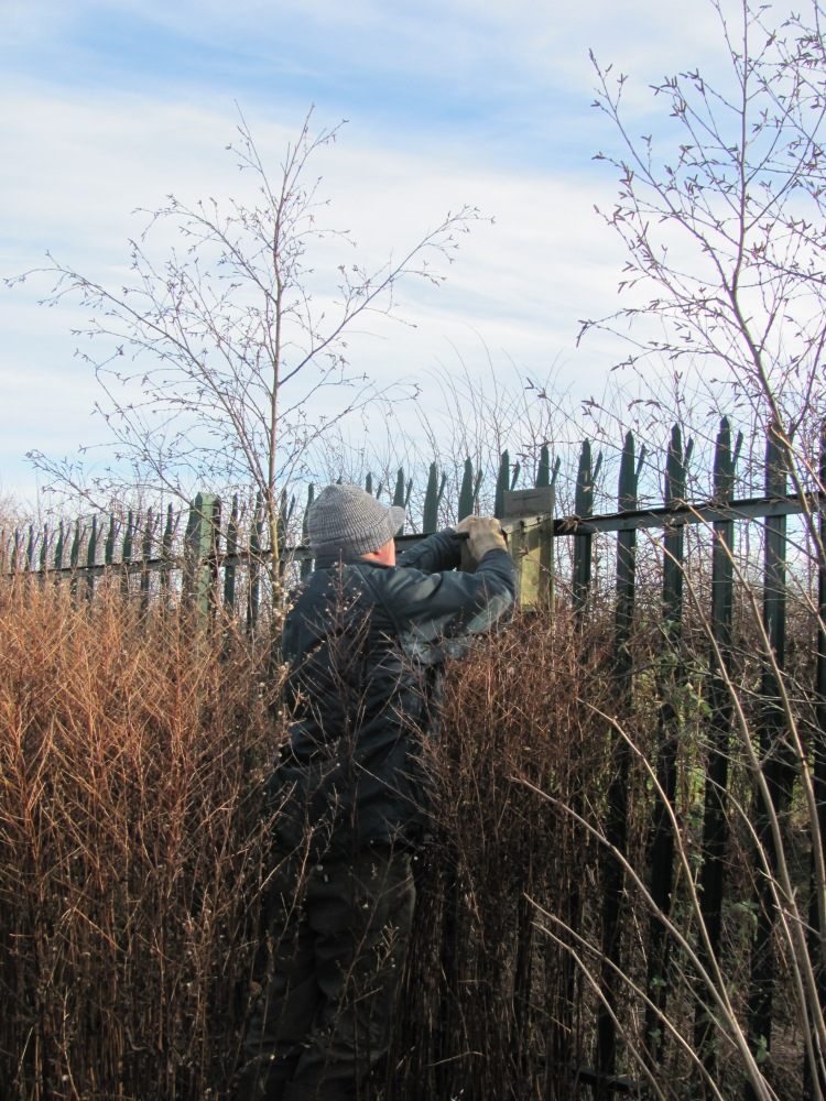A Morning at the Allotments - Checking the Bird Boxes (3/6)