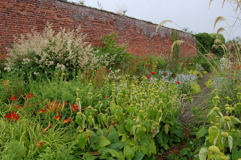 Day Lilies in a Walled Garden - Mynd Hardy Plants (5/6)