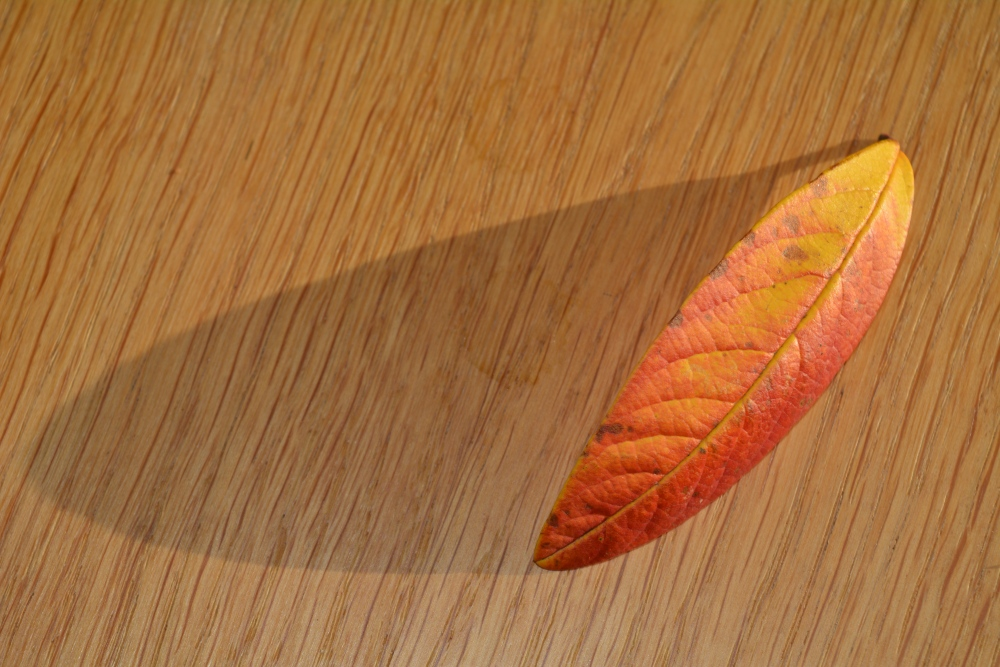 The Leaf (3/6)