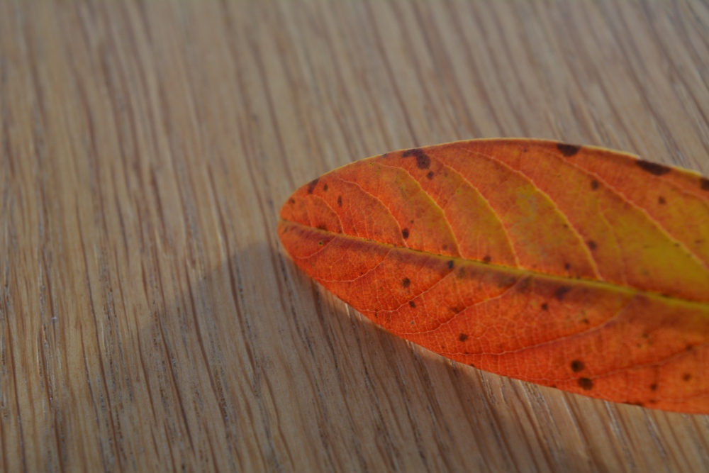 The Leaf (6/6)