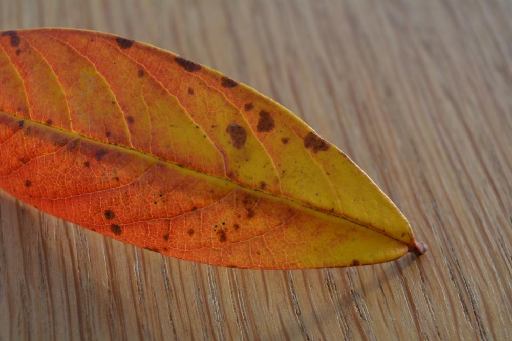 The Leaf (5/6)