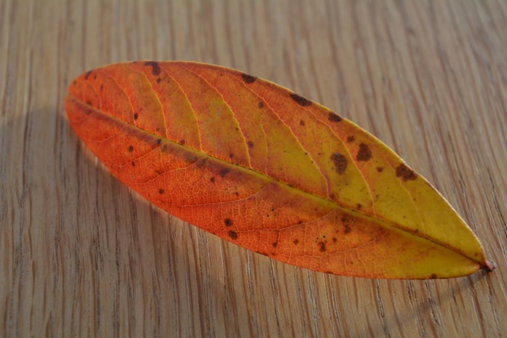 The Leaf (1/6)