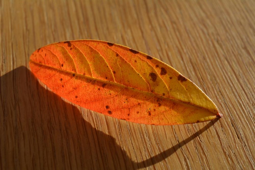 The Leaf (2/6)