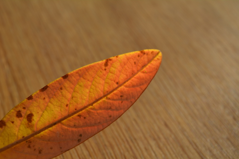The Leaf (4/6)
