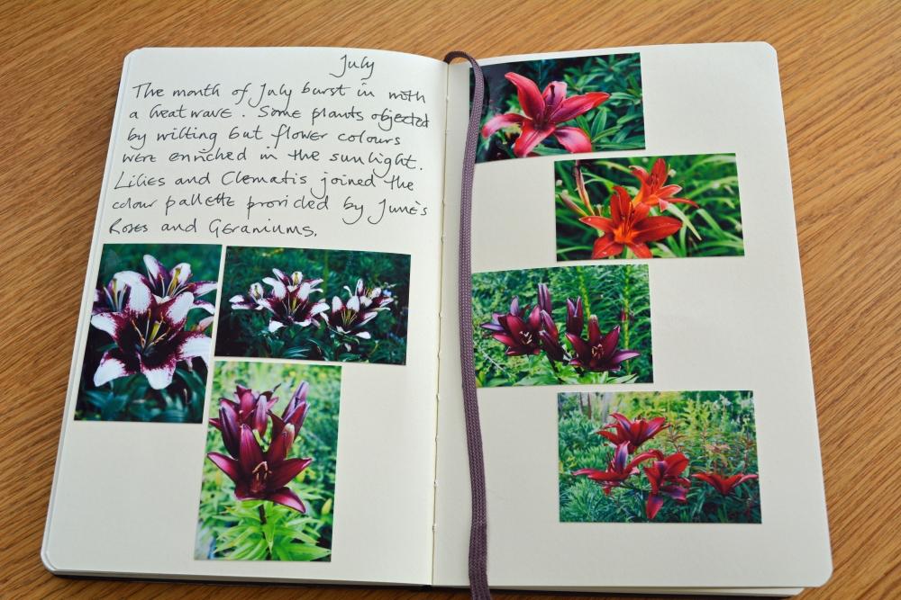 My Garden Journal - July (1/6)
