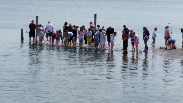Crabbing as the tide comes in.