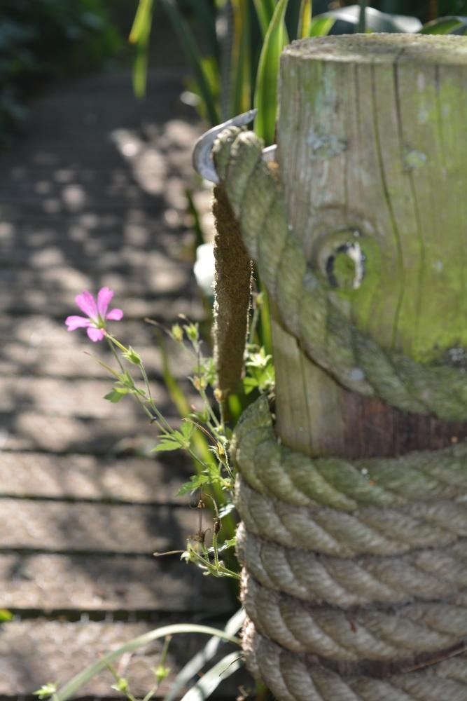 Aulden Farm Gardens - Part 2 (1/6)