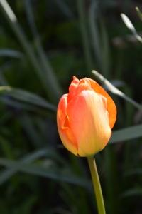 aprilpics-04
