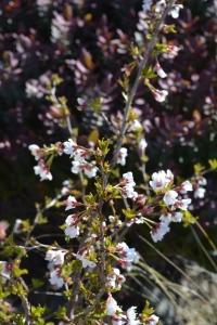 blossom-01