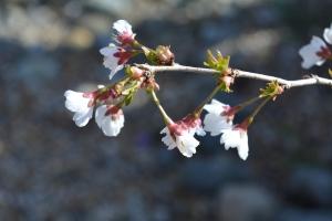blossom-02