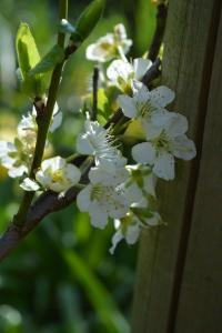 blossom-03