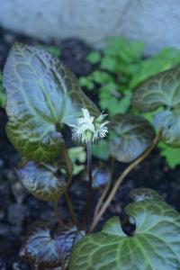 blossom-06