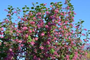 blossom-07