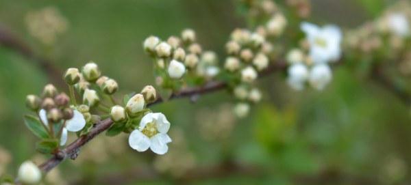 blossom-10