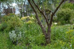 ngs garden-002