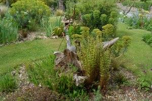 ngs garden-010