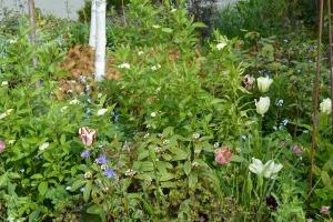 ngs garden-012