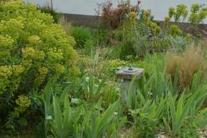 ngs garden-015