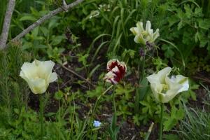 ngs garden-017