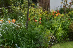 ngs garden-026