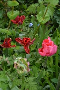 ngs garden-030