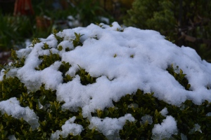 snow box-1