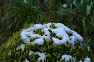 snow box-3