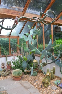 succulents-6