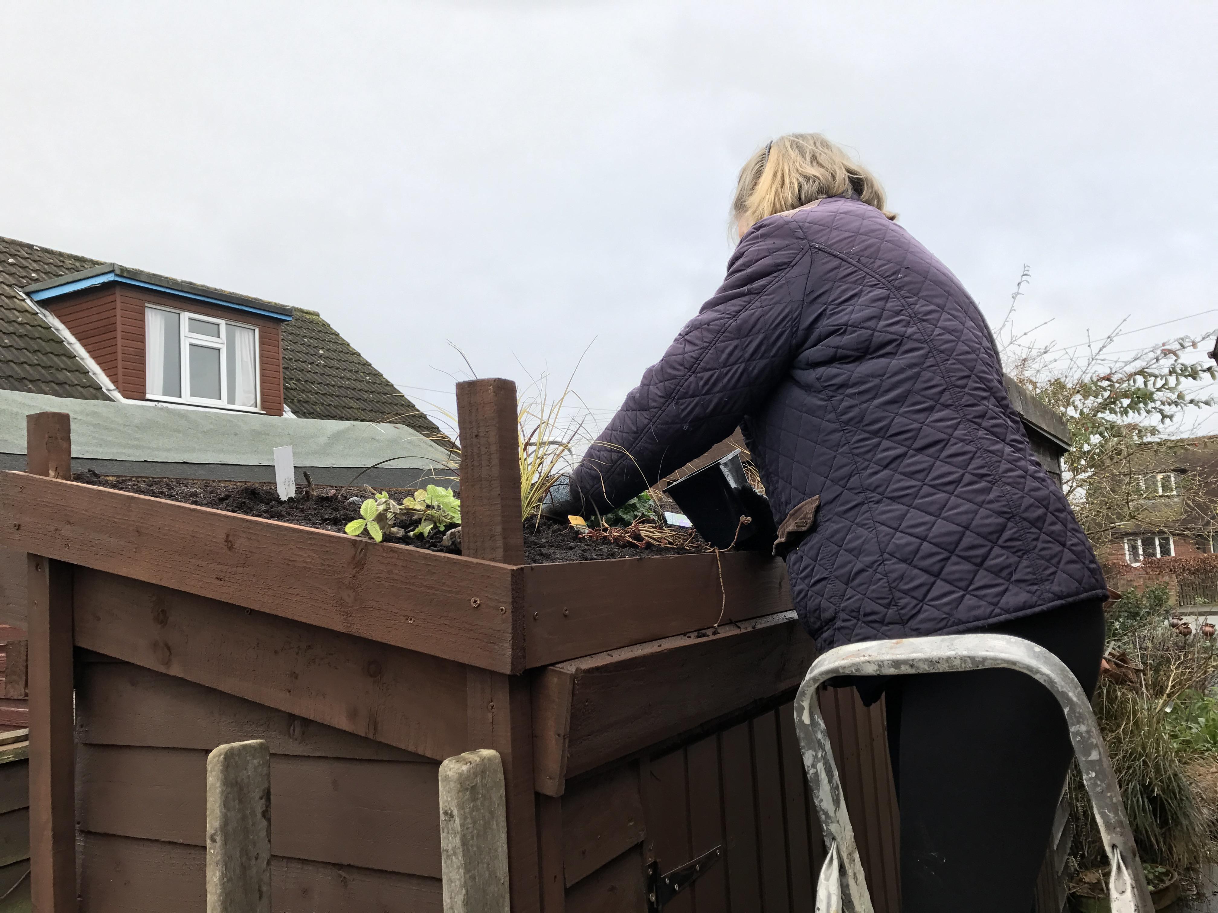 Greenbenchramblings Musings About Gardening The Natural