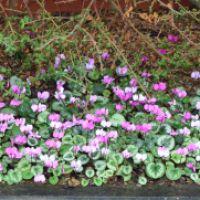 A canal-side garden in winter – John's Garden Part 2 — greenbenchramblings