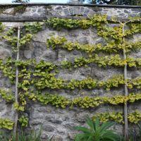 Seasonal Visits to two very Different Gardens – Bodnant Gardens — greenbenchramblings